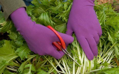 Gloves in garden