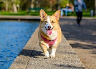 Dog walking by water