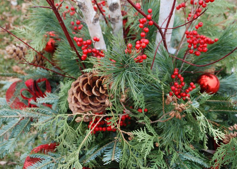 Evergreen, holly and pine cone