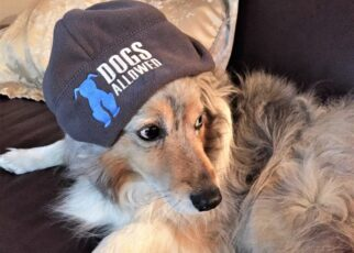 Dog with dogs allowed hat