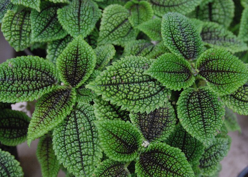 Moisture loving green plant