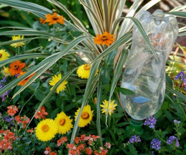 Water bottle watering flowers